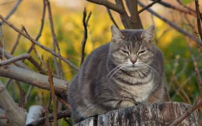 Bring-Cat-to-Vet